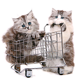Cats in cart